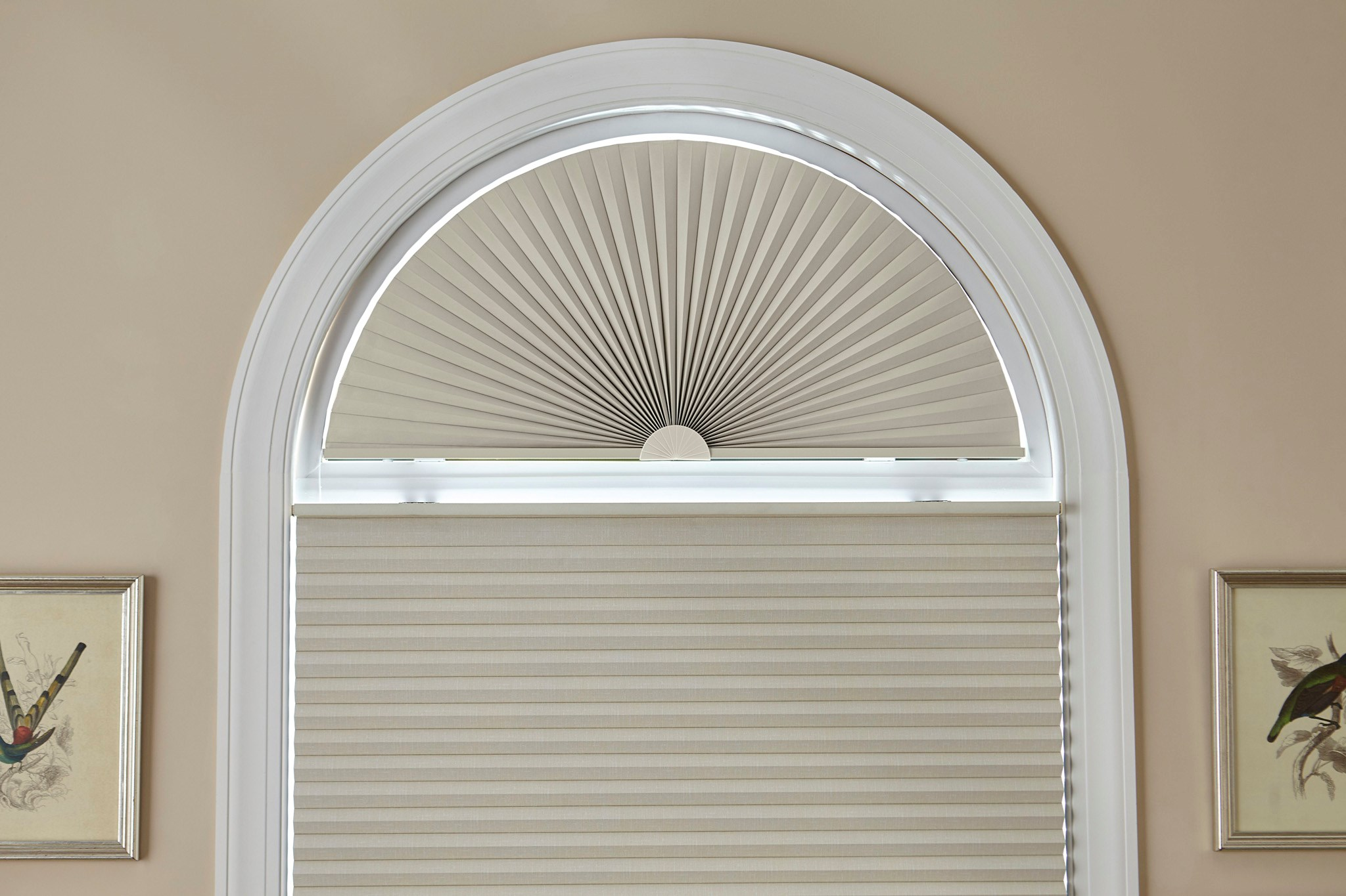 Blinds.com:  Signature Blackout Cellular Arch