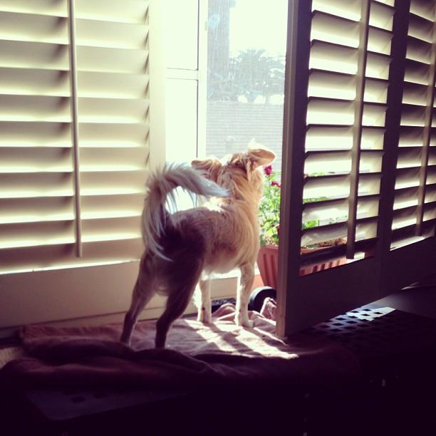 006_Random_dog_behaviors