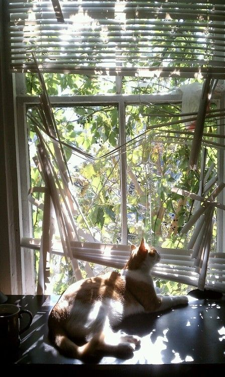 How To Keep Cats From Breaking Blinds The Finishing Touch