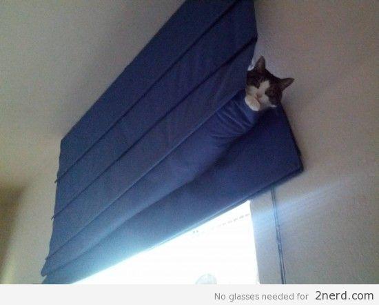Cat in roman shades hammock