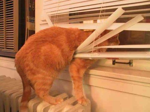 Keep Cats Out Of Blinds