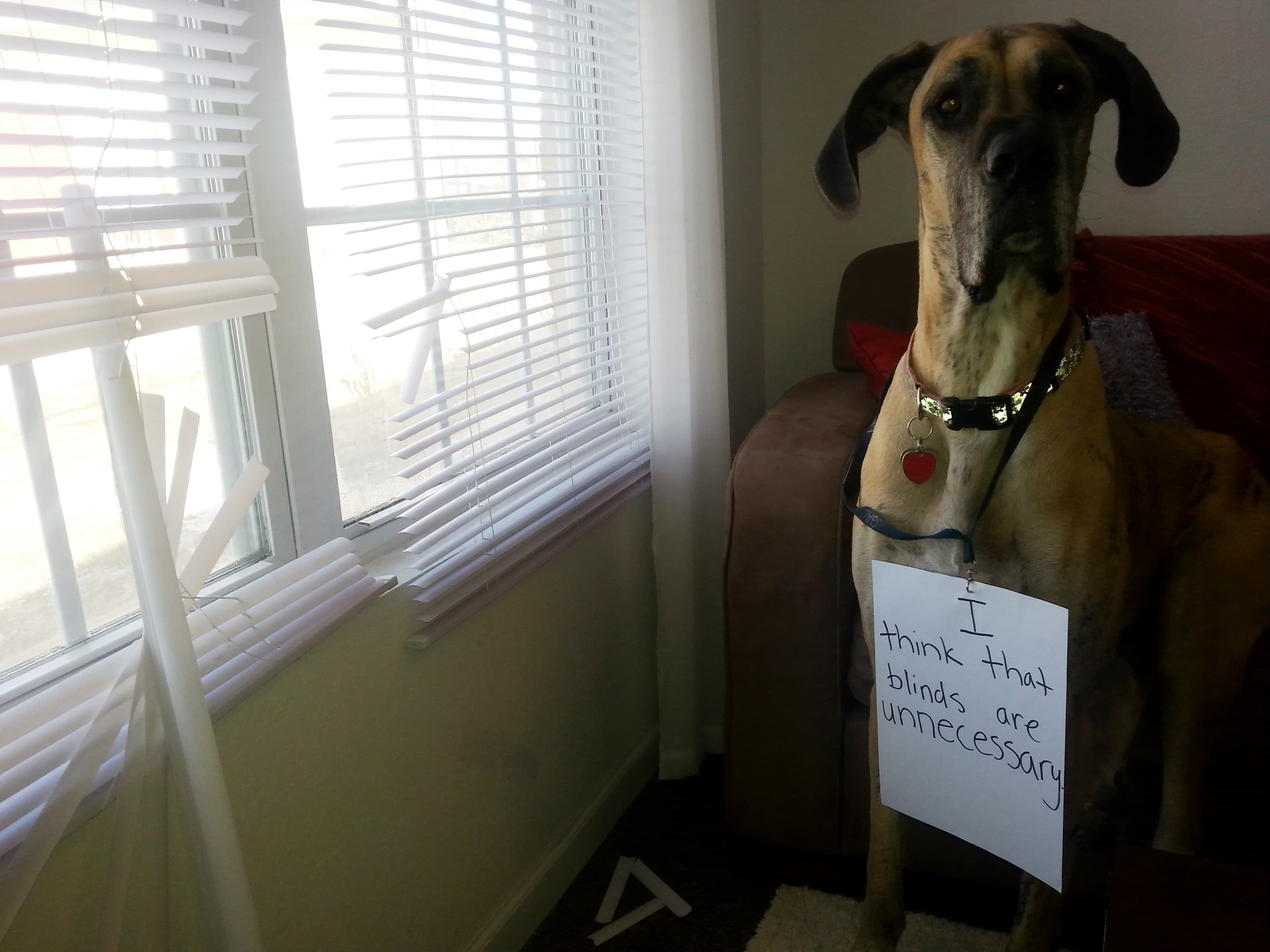 Dog broke blinds