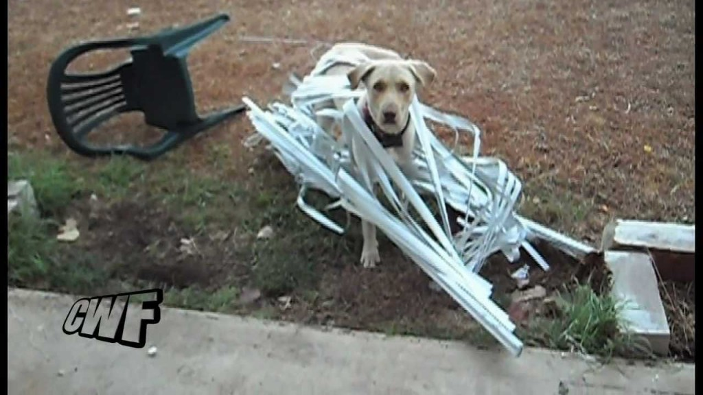 Dog stuck in blinds