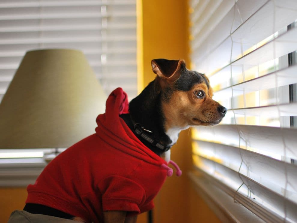 How To Keep Dogs From Destroying Blinds The Finishing Touch