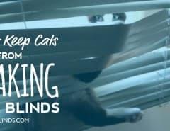 cat-blinds