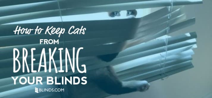 cat-blinds