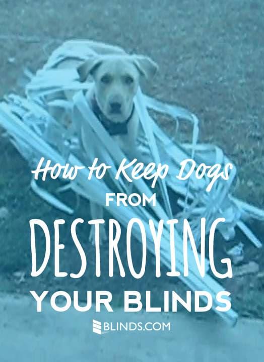 Dog-blinds