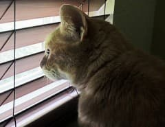 cat faux wood blinds
